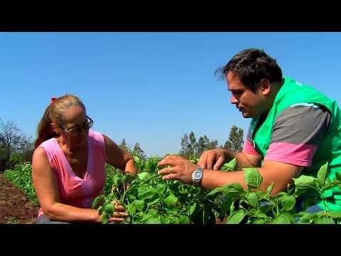 Conheça a importância da agricultura familiar em Campo Grande