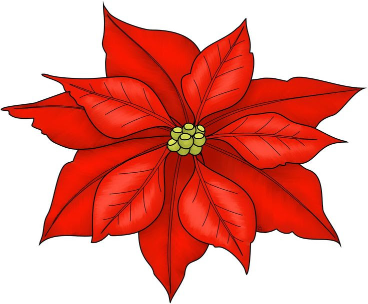 Free Poinsettia Flower Cliparts Download Free Clip Art Free Clip Art On Clipart Library