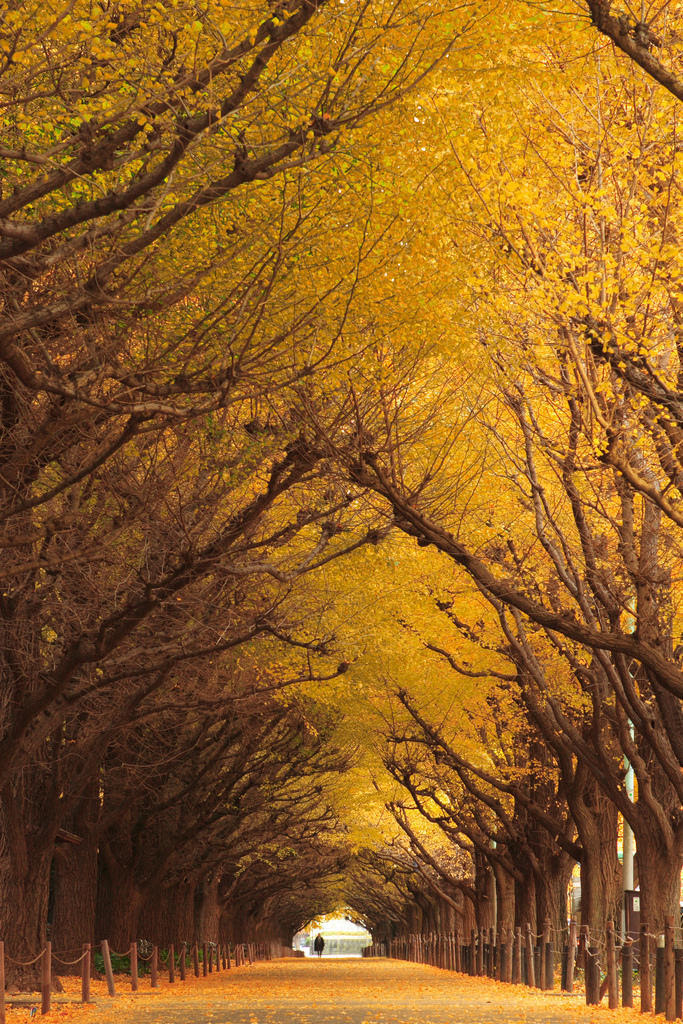 044 10 most beautiful tunnel of trees in the world