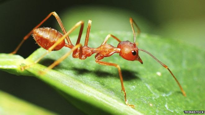 Image result for ant