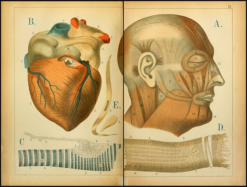 An atlas of Anatomy (FF Miller, 1879) e