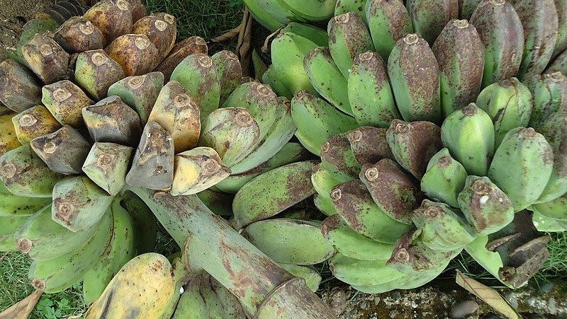 File:Saba bananas.jpg