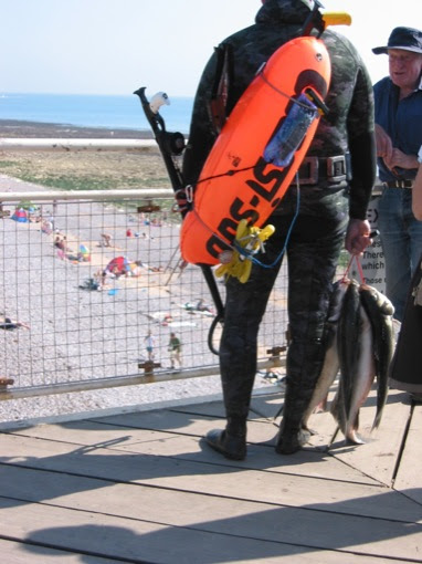 spear diving for sea bass