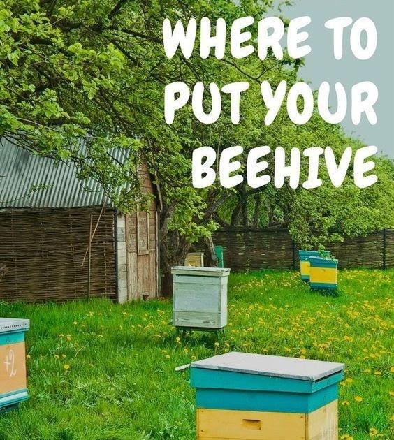 Raising Honey Bees In Your Backyard - BACKYARD HOME