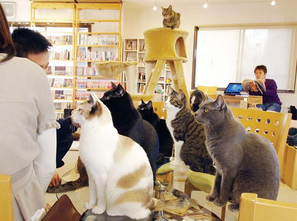 cat cafe chat japon tokyo 4 Cafe Neko No Mise : Le Café des Chats à Tokyo