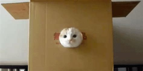 gambar kucing animasi lucu bergerak gif multi info