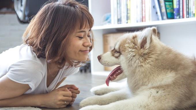 ¿Sabes cómo hay que acariciar a un perro?
