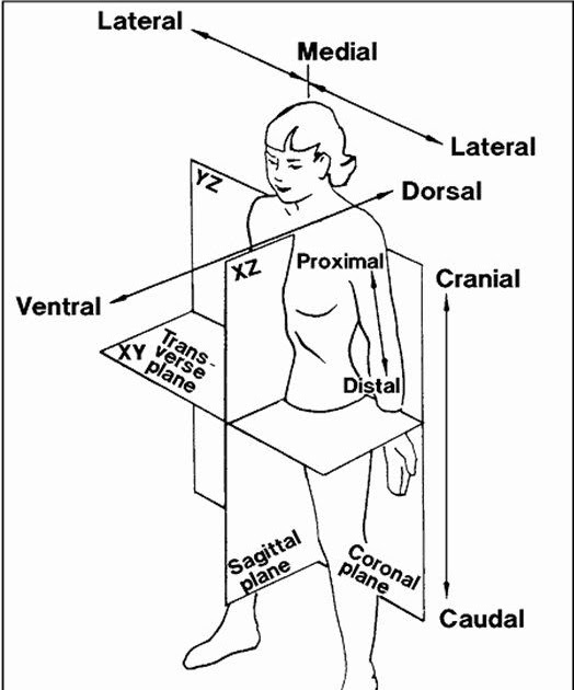 Directional Terms Worksheet Anatomy And Physiology Answers ...