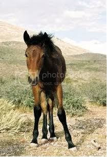 Horse slaughter,wild horses BLM