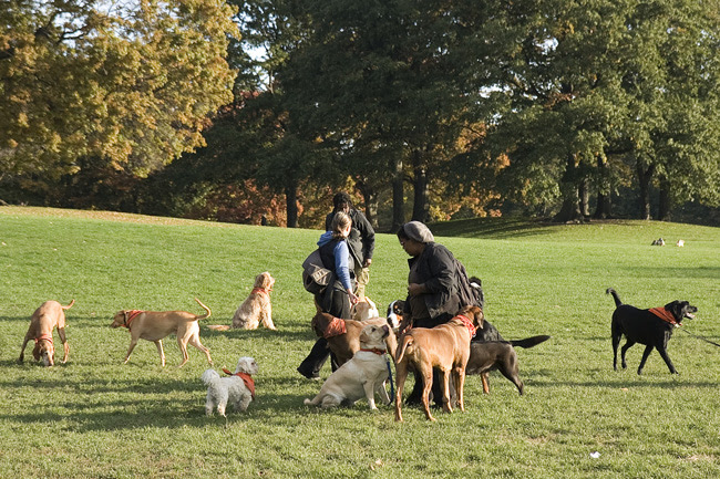 Dog pack, Prospect Park