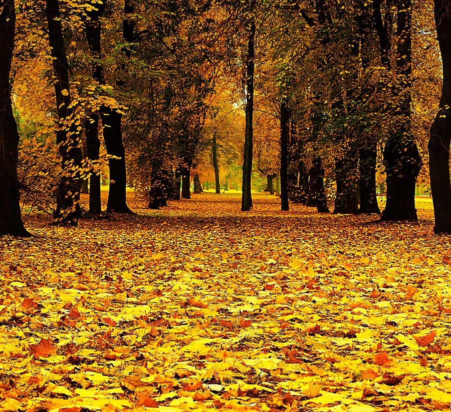 fall autumn trees leaves beautiful