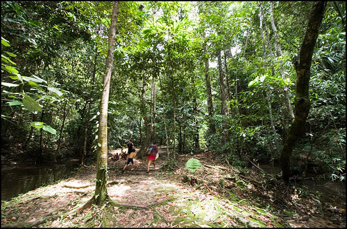 Forest at Sa Nang Manora