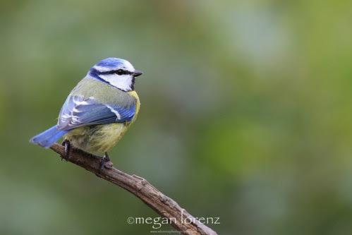 Feeling Blue by Megan Lorenz