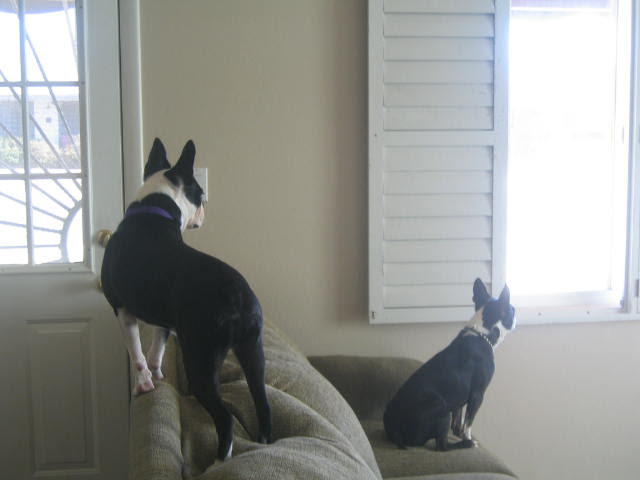 They have several places to observe the front yard