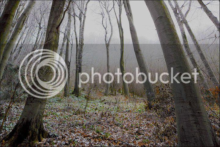 photo Evgeni-Donev-3_zps6e4d15d0.jpg
