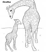 Coloriage Girafe Gratuit A Imprimer
