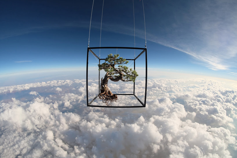azuma makoto launches 50 year old botanical bonzai tree into outer space