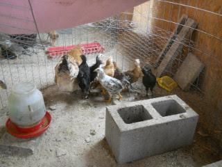 2016 Chicks, Group #4