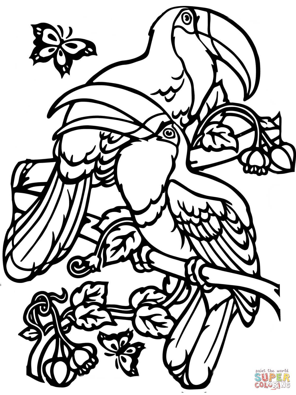 Dibujo De Dos Tucanes Para Colorear Dibujos Para Colorear Imprimir
