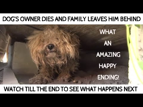 Dog's Owner Dies And Family Leaves Him Behind - Watch What Happens After