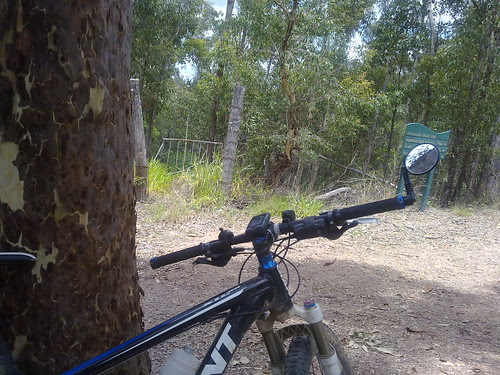 Mt Coot-tha Forest