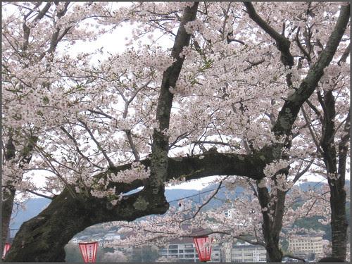 35 Hiroshige branches