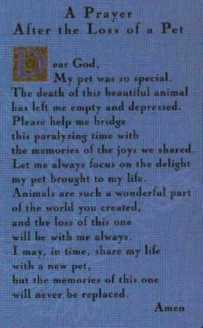 Loss Of A Dog Prayer Prayer Request For Karen E And The L