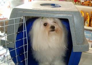 O cão deve sempre viajar na caixa de transporte, que deve estar forrada (Foto: Pedro Carlos Leite / G1 Itapetininga)