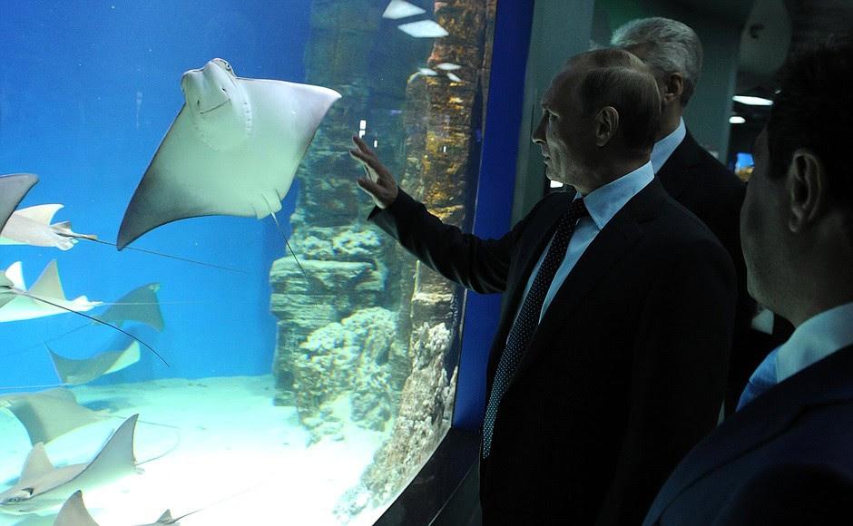 Вовремя посещения Центра океанографии иморской биологии «Москвариум».
