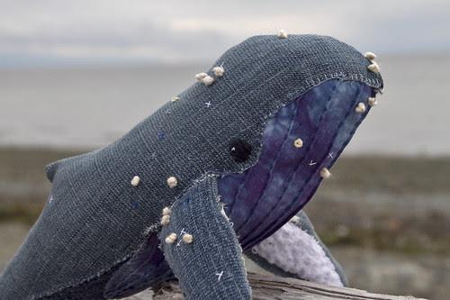 humpback whale no.17