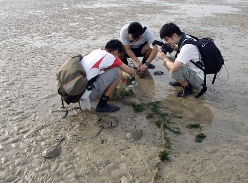 Driftnet on Chek Jawa, Aug 07