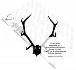 Antler Rack No.5 Silhouette Woodworking Pattern - fee plans from WoodworkersWorkshop® Online Store - antlers,silhouettes,shadow art,animals,yard art,drawings,plywood,plywoodworking plans,woodworkers projects,workshop blueprints
