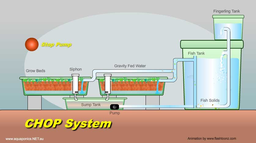Commercial Aquaponics System Design