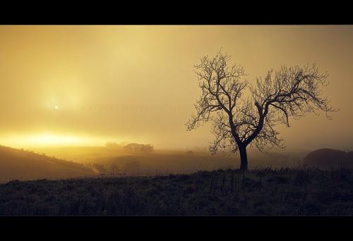 The fog... by Stuart Stevenson