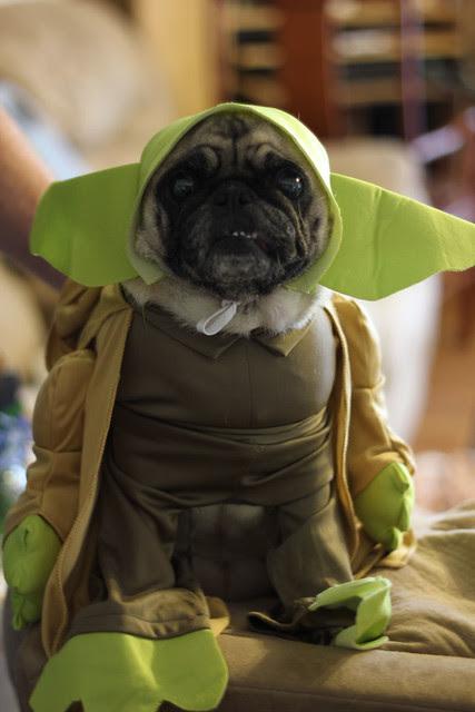 Lola Yoda