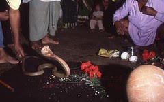 Nag Panchami at Battis Shirala by firoze shakir photographerno1