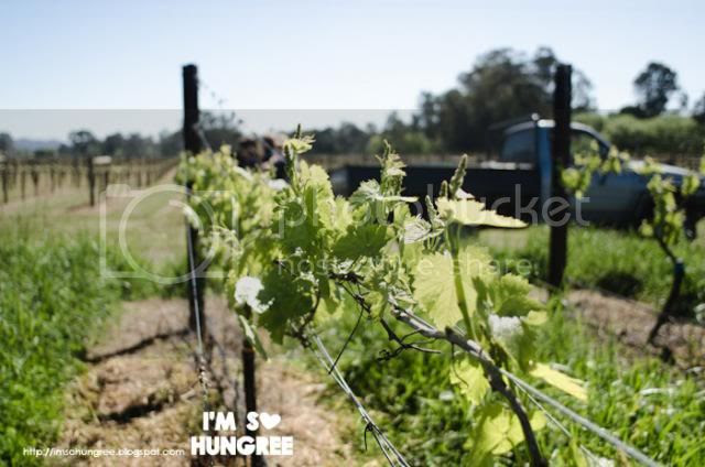 photo 1-pizzini-wines-1548_zps57ef98a7.jpg