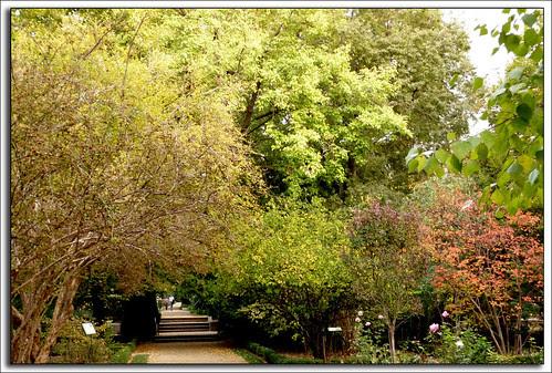otoño en el jardín botánico