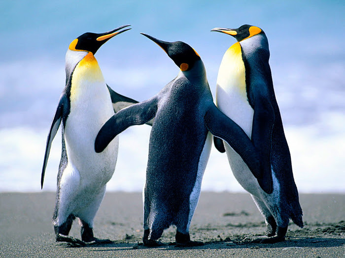 penguins34 (700x525, 423Kb)