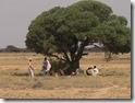 SOMALIA 158