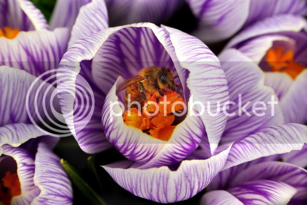 Raynox Bee