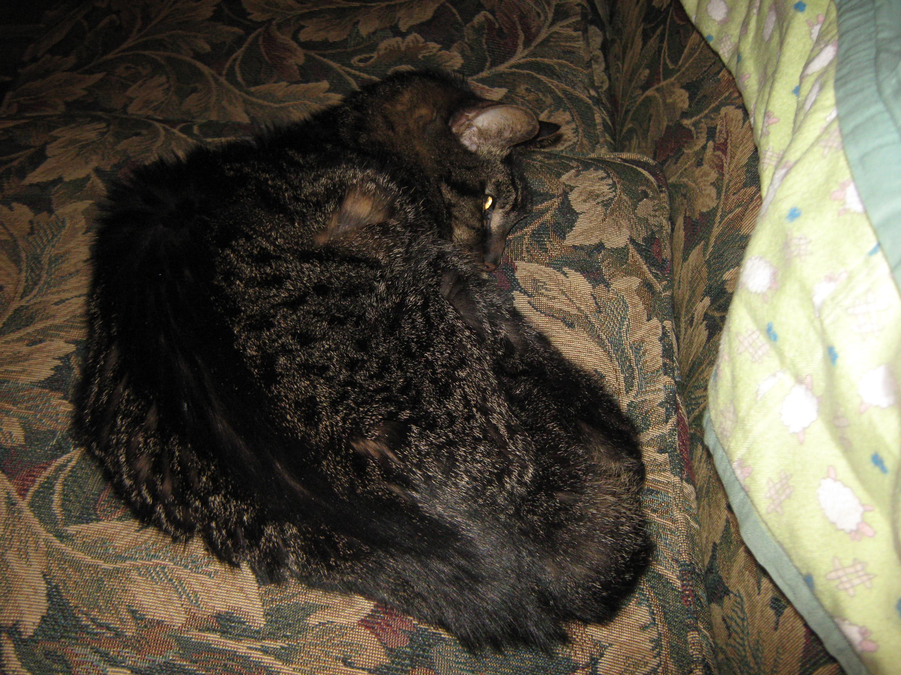 Mighty Hunter, asleep in a basket
