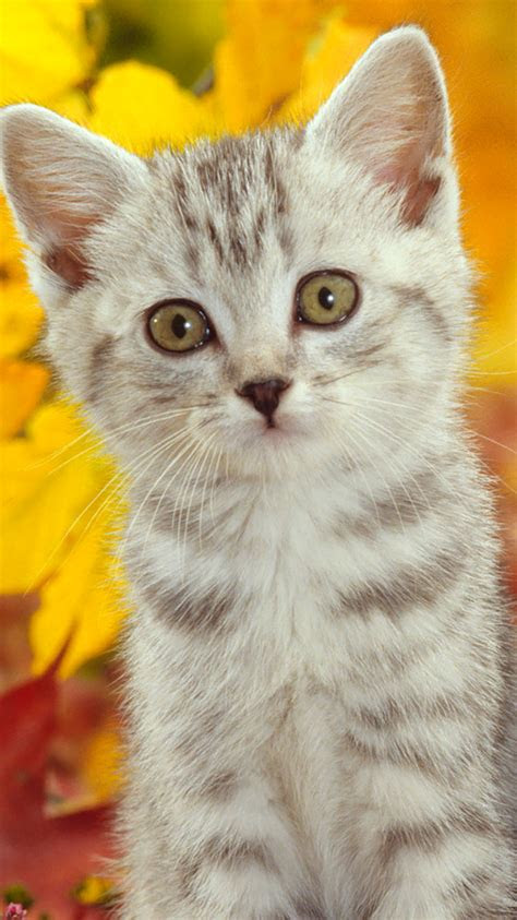hd cat iphone wallpapers