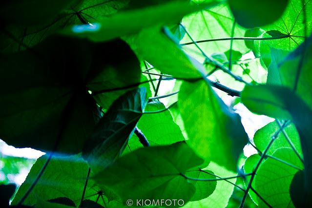 KIOMFOTO-6736