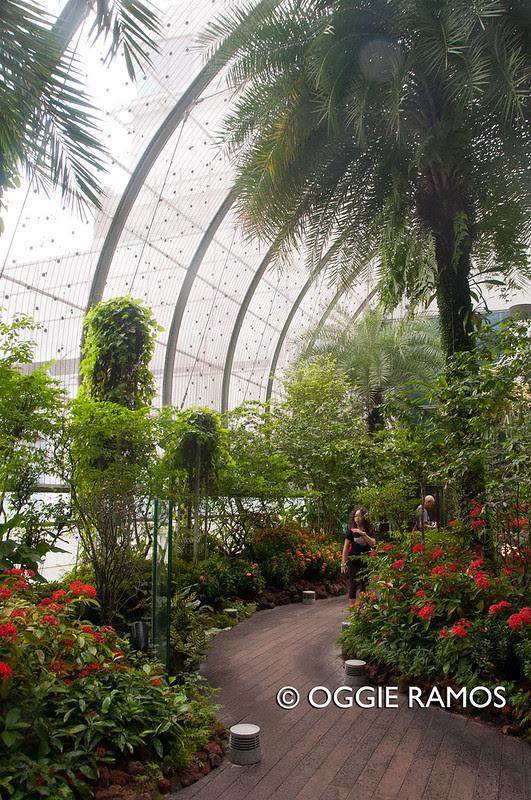 Singapore-Changi-Butterfly-Garden