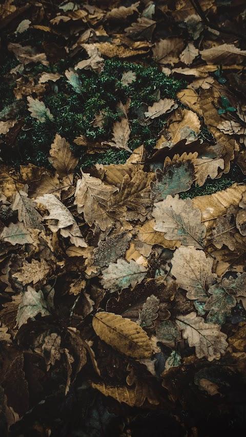 اجمل الخلفيات ايفون كلاكسي خلفية لطبيعة تساقط اوارق الخريف بدقة عالية