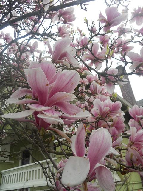 spring2011 202