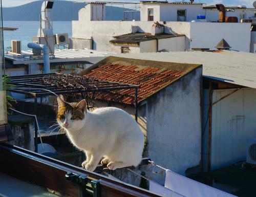 Bodrum, Turkey-13.jpg