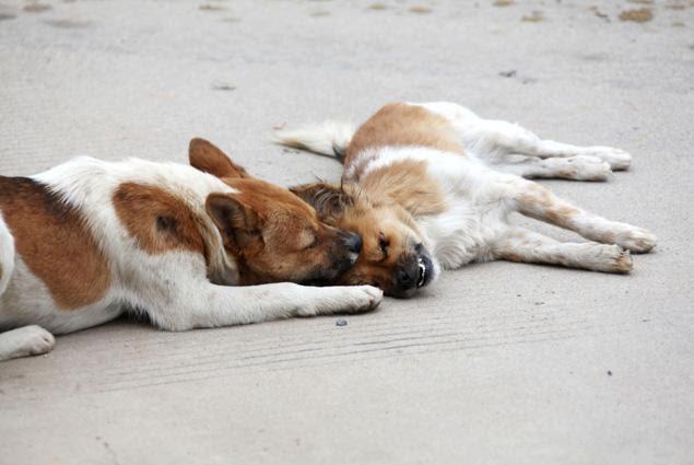 Μία φωτογραφία άκρως συγκινητική. Ένας αδέσποτος σκύλος, στέκεται δίπλα στο νεκρό σώμα της συντρόφου του. Έμεινε δίπλα της όλη την ημέρα, αγγίζοντας την,  γλείφοντας την, και σπρώχνοντας την, προσπαθώντας να την ξυπνήσει. Το συμβάν έγινε στην επαρχία Fujian στην Κίνα,