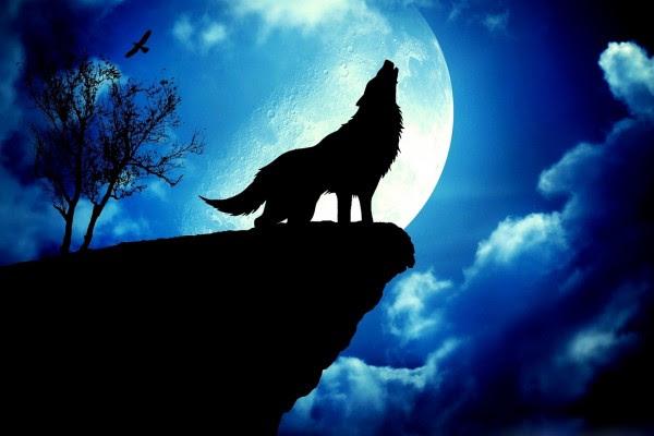 Un Lobo En Luna Llena 19497